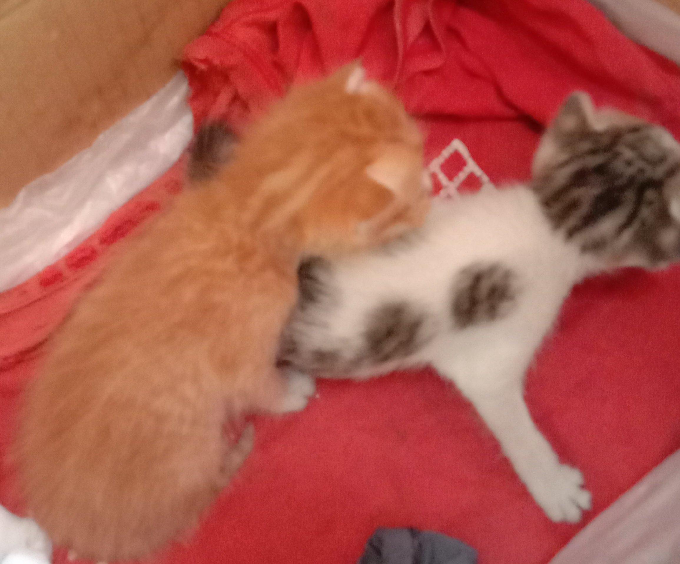 Two baby kitten