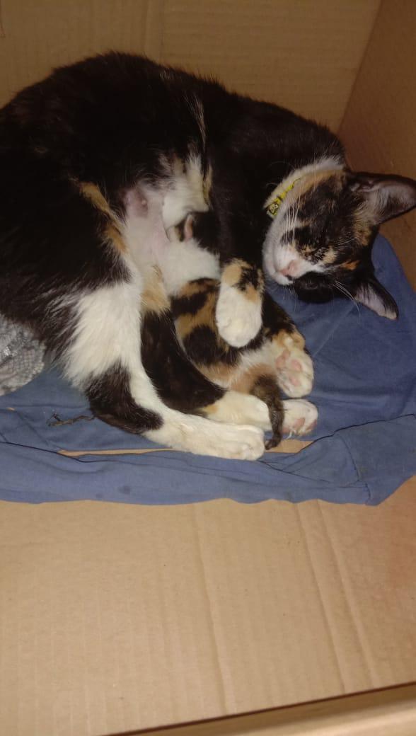 kucing melahirkan di rumah